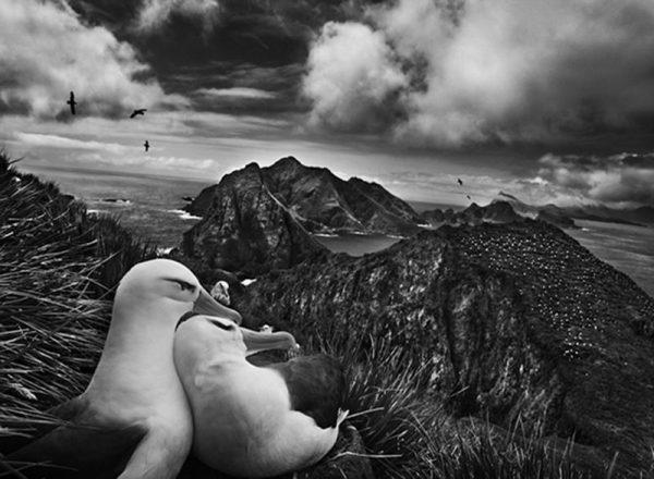 Sobre gostar, ou não, de Sebastião Salgado - Fotografia DG